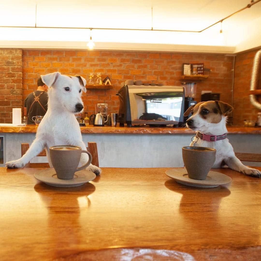 Dos perros sentados en la barra de Terruá Café, cafeteria miraflores